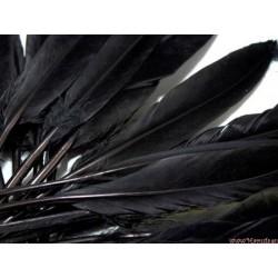 Pióra WINETOU 12-14cm 10 szt. CZARNE
